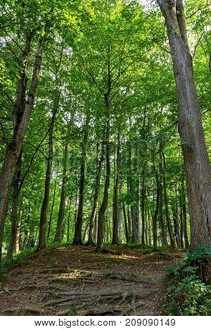 Beautiful Green Forest In Summer. Countryside Road Path Way Lane Pathway On Sunny Day In Spring Forest.