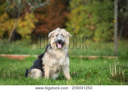 adorable mixed breed dog posing outdoors in summer