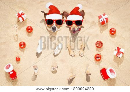 Merry Chtristmas  Dogs At The Beach