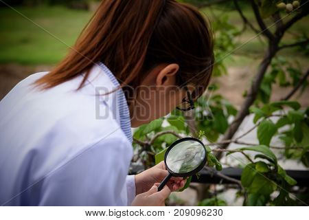 Scientist Woman Inspect Leaf By Magnifying Glass