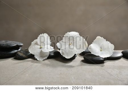 hydrangea petals with pile of black stones on gray background