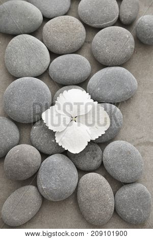 hydrangea petals with pile of gray stones on gray background