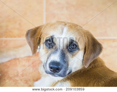 Close up of mixed breed eye expression mean pleased
