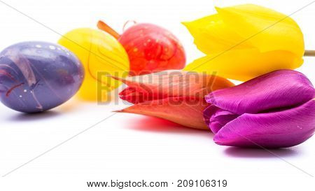 close-up of colorful easter eggs and tulip flowers on white background with copy space. border template, easter greeting and holiday card.