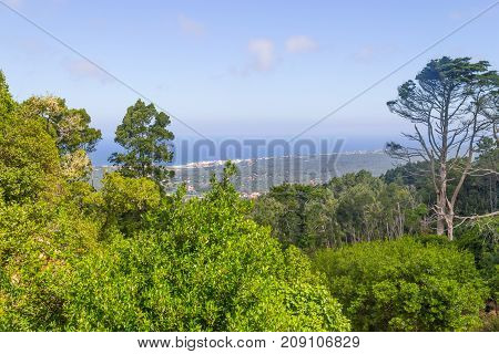 Coast view and vegetation in Sintra Portugal