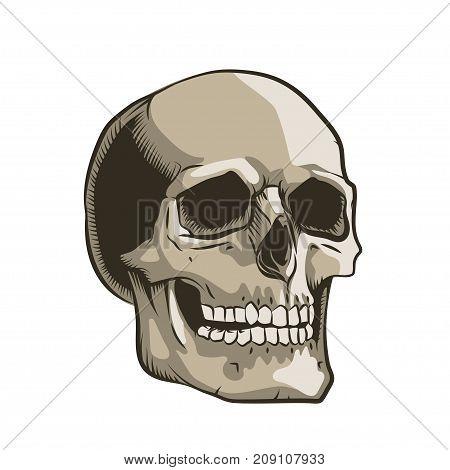 Human skull hand drawn style outline illustration