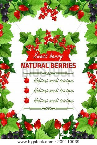 Berry sweet fruit, natural food banner template. Currant branches with red and black berry, forest wild briar with green leaf, arranged into frame for fruit store poster or juice menu design