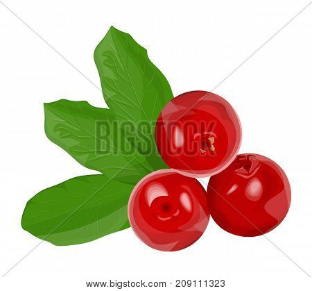 Isolated red cowberries with green leaves on white background.