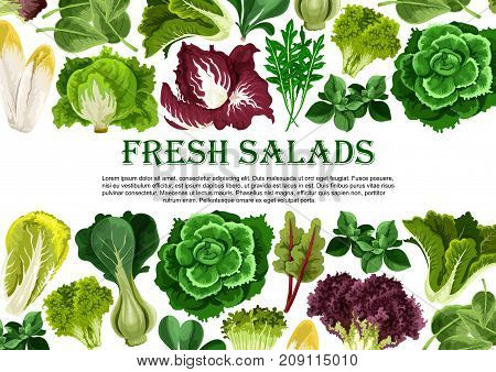 Salad leaf and vegetable greens fresh food banner. Vector lettuce, cabbage and spinach, bok choy, cress salad and iceberg lettuce, arugula, chicory, radicchio, chard, batavia poster design