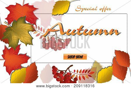 Autumn Calligraphy. Seasonal Lettering.web Banner Template.vector Illustration.