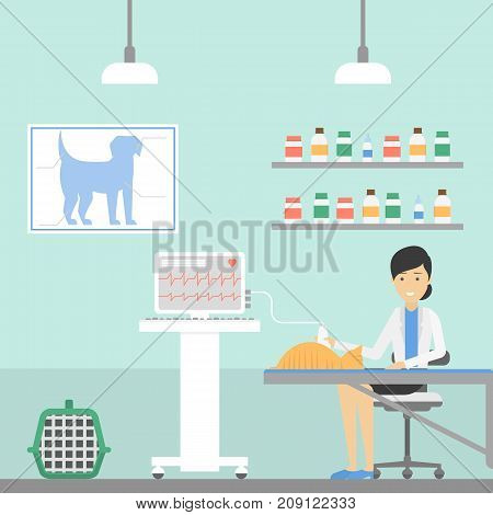 Cat at vet clinic. Female doctor examines the pet.
