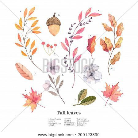 Hand drawn watercolor illustrations. Autumn Botanical clipart. Set of fall leaves herbs flowers and branches. Floral Design elements. Perfect for invitations greeting cards blogs posters prints