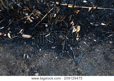 The Leaves Of The Ash After The Fire