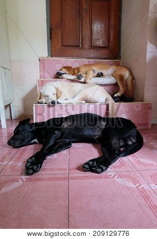 Three Sleeping dog on the stairs in house