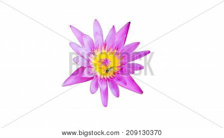 Pink lotus blossomsPink flower isolated on white background with clipping path