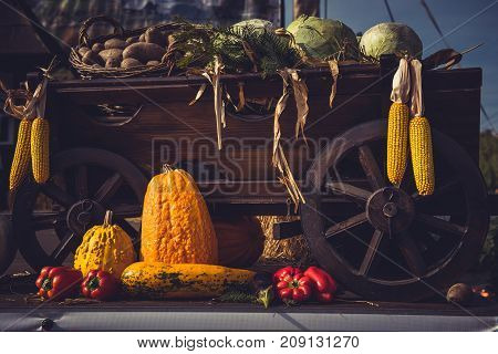 Autumn Harvest. Cart Full With Freshly Picked Vegetables