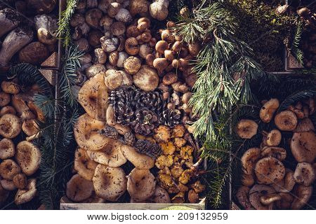 Edible Mushrooms In A Wooden Box
