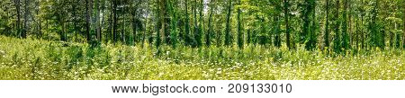 Panoramic forest in summer Northern New-York State