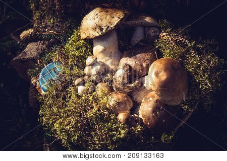 Edible mushrooms and moss in a fair. Natural background