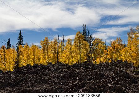 Amazing autumnal tree lined lava field in Dixie National Forest Utah near Cedar Breaks National Monument.