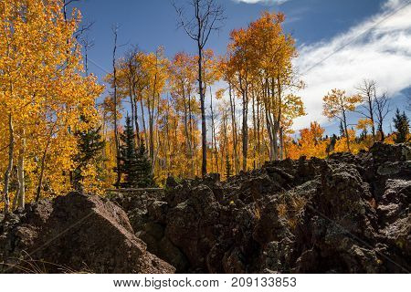 Detailed view of the Lava Field in Dixie National Forest in Utah in the autumn with bright and vibrant fall foliage.