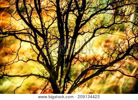 Artistic background with tree and moody colors