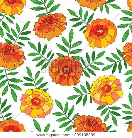 Vector seamless pattern with outline orange Tagetes or Marigold flower and green leaves on the white background. Floral pattern in contour style with ornate Marigold for summer design.