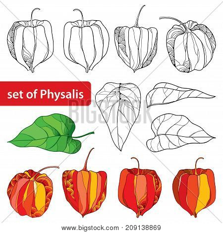 Vector set with outline Physalis or Cape gooseberry or Ground cherry fruit, leaf and berry isolated on white background. Perennial plant in contour style for autumn design and coloring book.