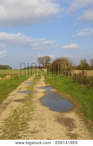 Farm Track And Hedgerow