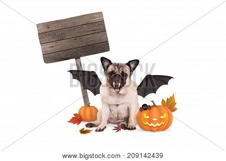 pug dog dressed up as bat for halloween with scary pumpkin lantern and blank wooden sign isolated on white background