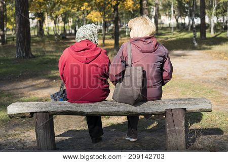 Two women are sitting on a wooden bench in the park. Back view.