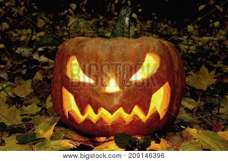 Halloween scary pumpkin in the night forest glows yellow