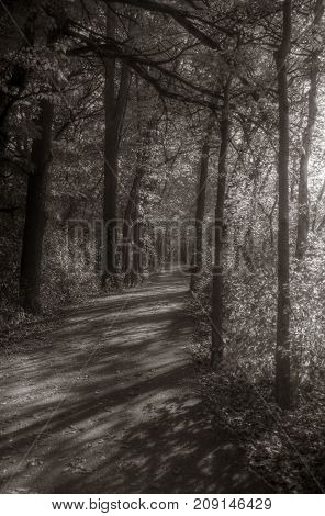 A country trail through fall folliage with sunlight.