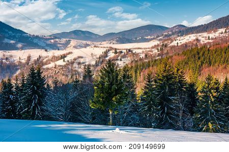 Spruce Trees On Snowy Rural Hillside In Mountains