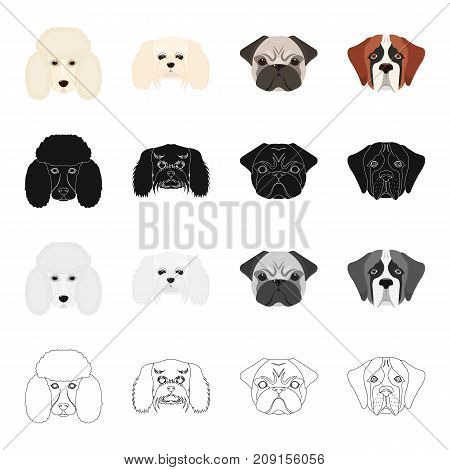 Poodle, maltese, bulldog, and other  icon in cartoon style.Dog, animal, domestic icons in set collection