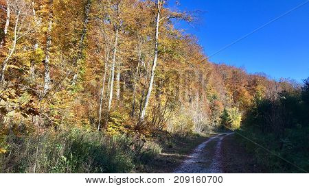beautiful autumn forest with sun shining over pebble path