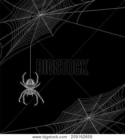 Halloween background with spider webs and spider and place for text