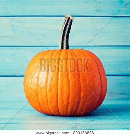 Single pumpkin over tuquoise colored wood background