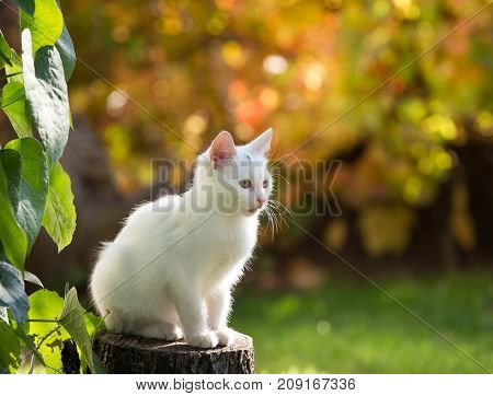 Small White Cat In Garden