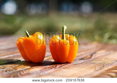 Two homemade orange bulgarian peppers on a brown wooden background with a blurred background