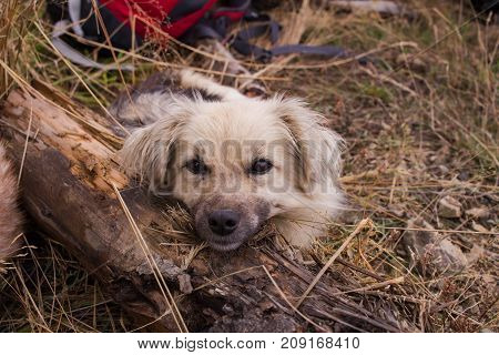 Cute dog outdoors, picture of metis dog