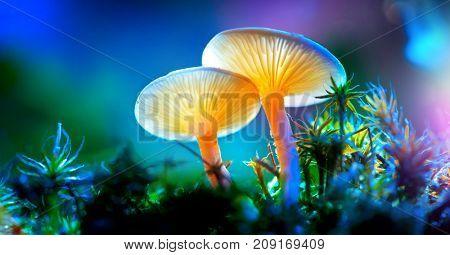 Mushroom. Fantasy Glowing Mushrooms in mystery dark forest close-up. Beautiful macro shot of magic mushroom, fungus. Border art design. Magic light.