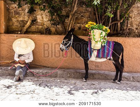 Man With Mexican Revolutionary Costume And Donkey