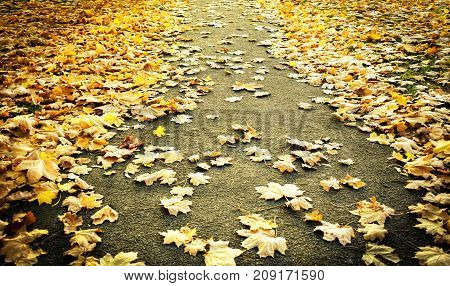 Autumn Image - Study of Fallen Leaves Scattered on a Diminishing Pathway