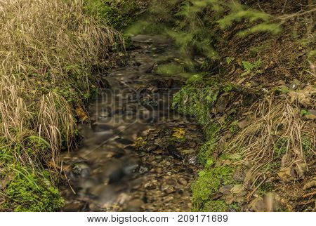 Small forest creek near Roprachtice village in north Bohemia