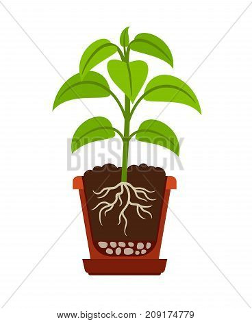 Houseplant icon showing roots in flower pot. Vector illustration2