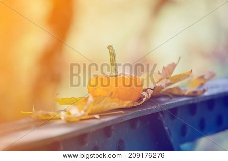 Yellow Pumkin With Leaves On Metal Bridge In A Park