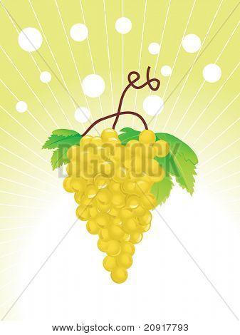 grapes on the vine, illustration poster