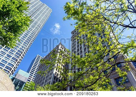 Trees and skyscrapers on a beautiful day in downtown Chicago