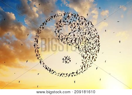 Silhouette of birds flying in Yin Yang formation at sunset sky.